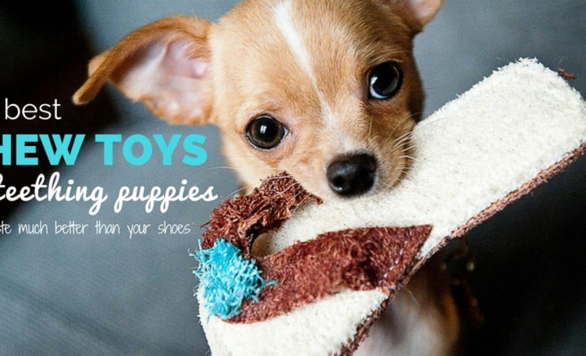 best chew toys for teething puppies