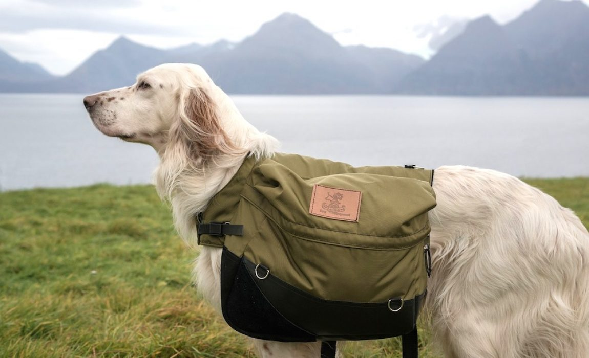 e88f95fffb 5 Best Saddle Bags For Dogs [2019]: Canine Packs For Hiking Hills!