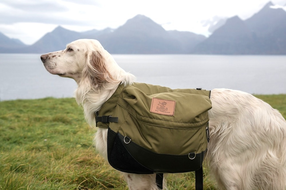 5 Best Saddle Bags For Dogs 2019 Canine Packs For