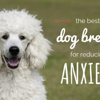 best-dogs-for-anxiety