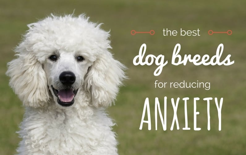 Best Companion Dogs For Depression