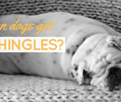 can dogs get shingles
