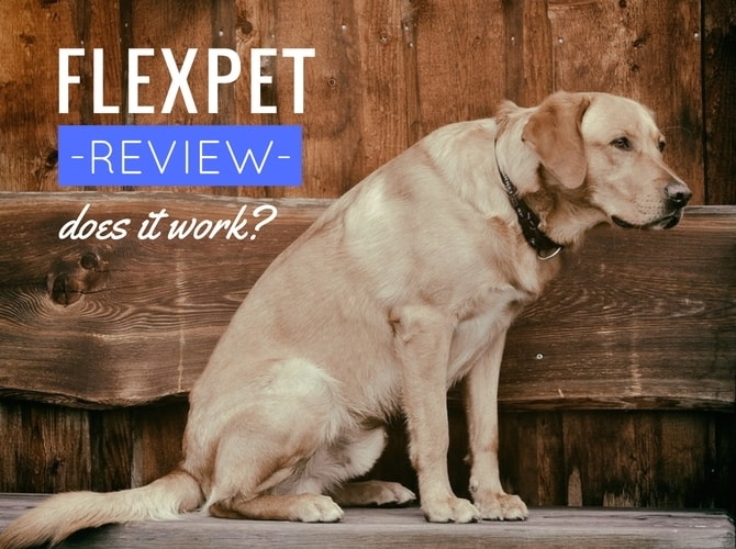 Flexpet Review: Is It Legit For Curing A Dog's Joint Pain?