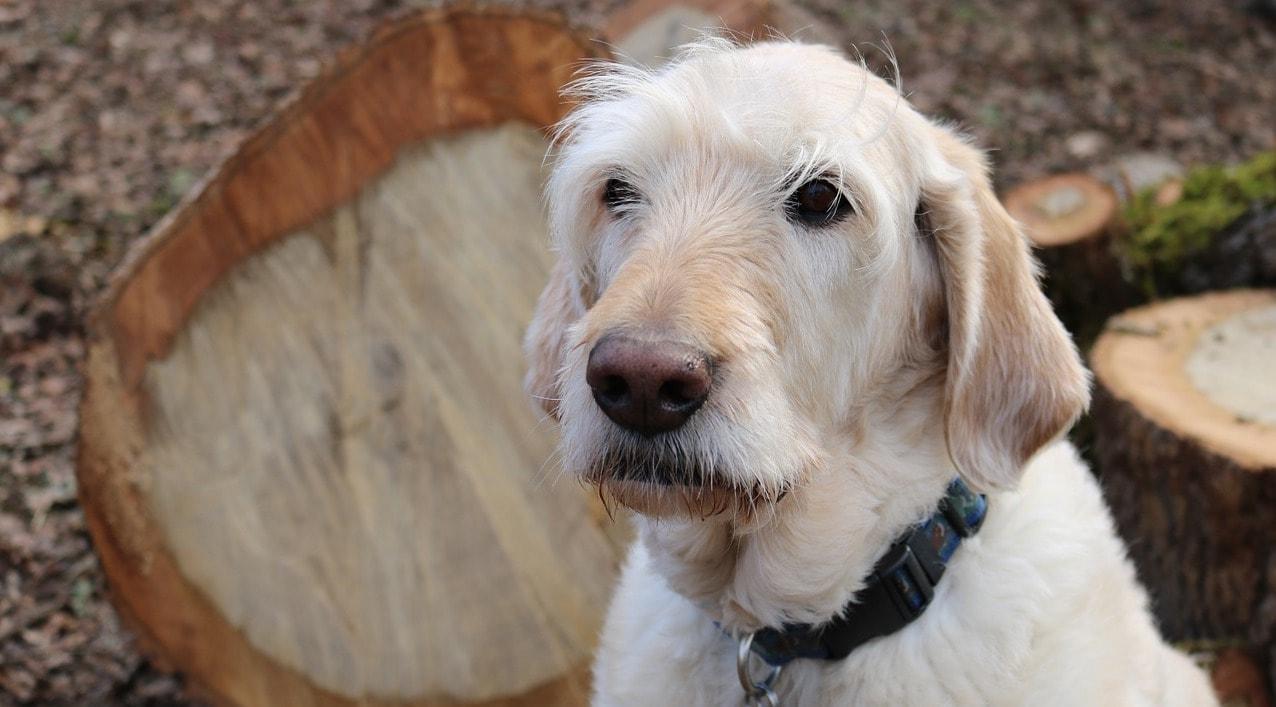Dog Treats With Glucosamine Chondroitin