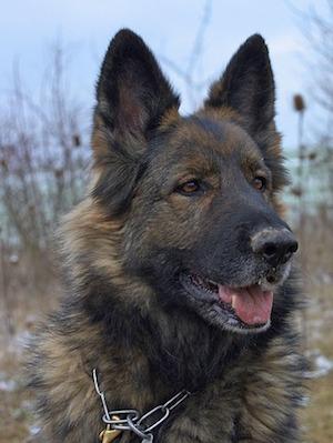Can I give my glucosamine to my dog?