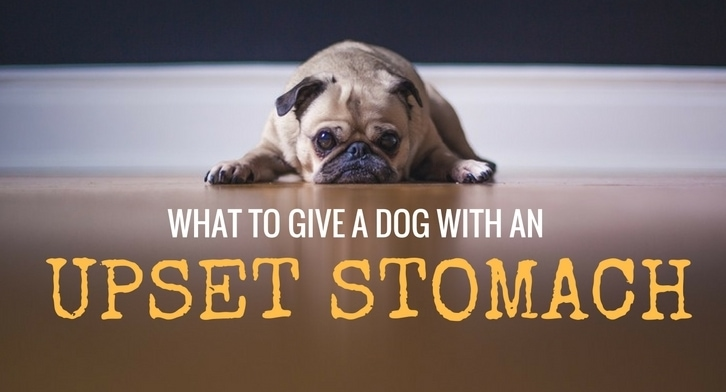 what to give a dog with an upset stomach