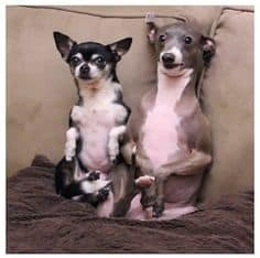 what type of dog is kermit and marbles