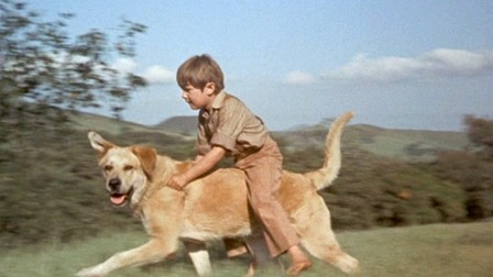 what type of dog is old yeller