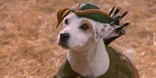 what type of dog is wishbone