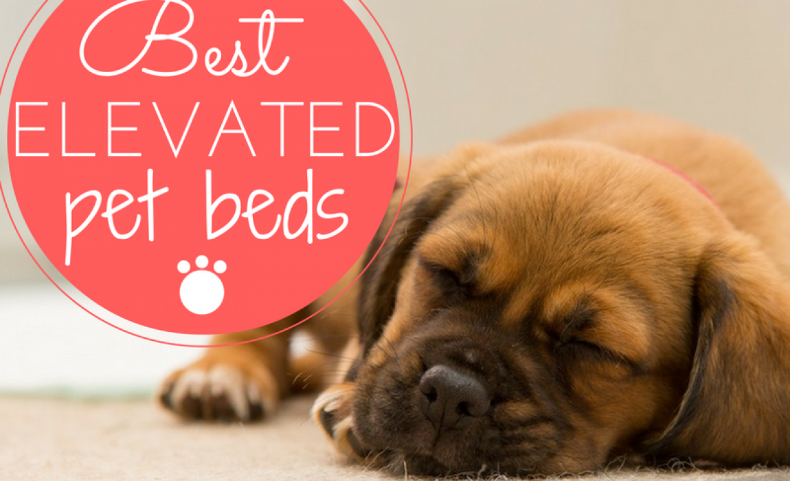 5 Best Elevated Dog Beds [2019 Reviews]: Putting Your Pet on