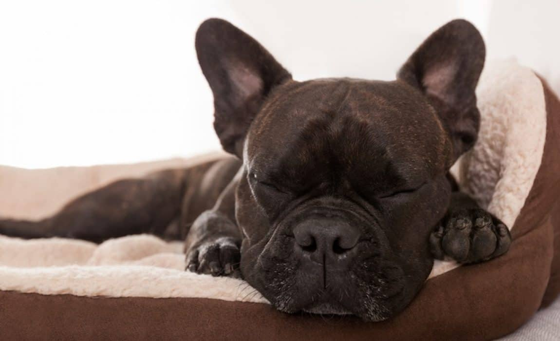 6 Best Dog Beds With Bolsters 2019 Reviews Beds With