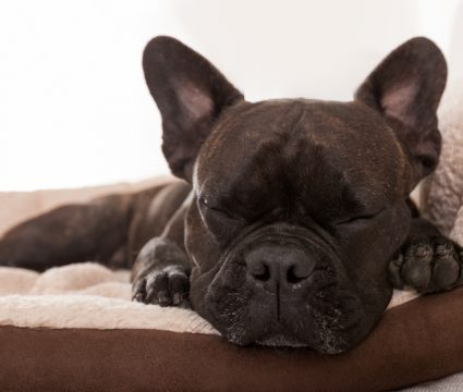 best dog beds with bolsters