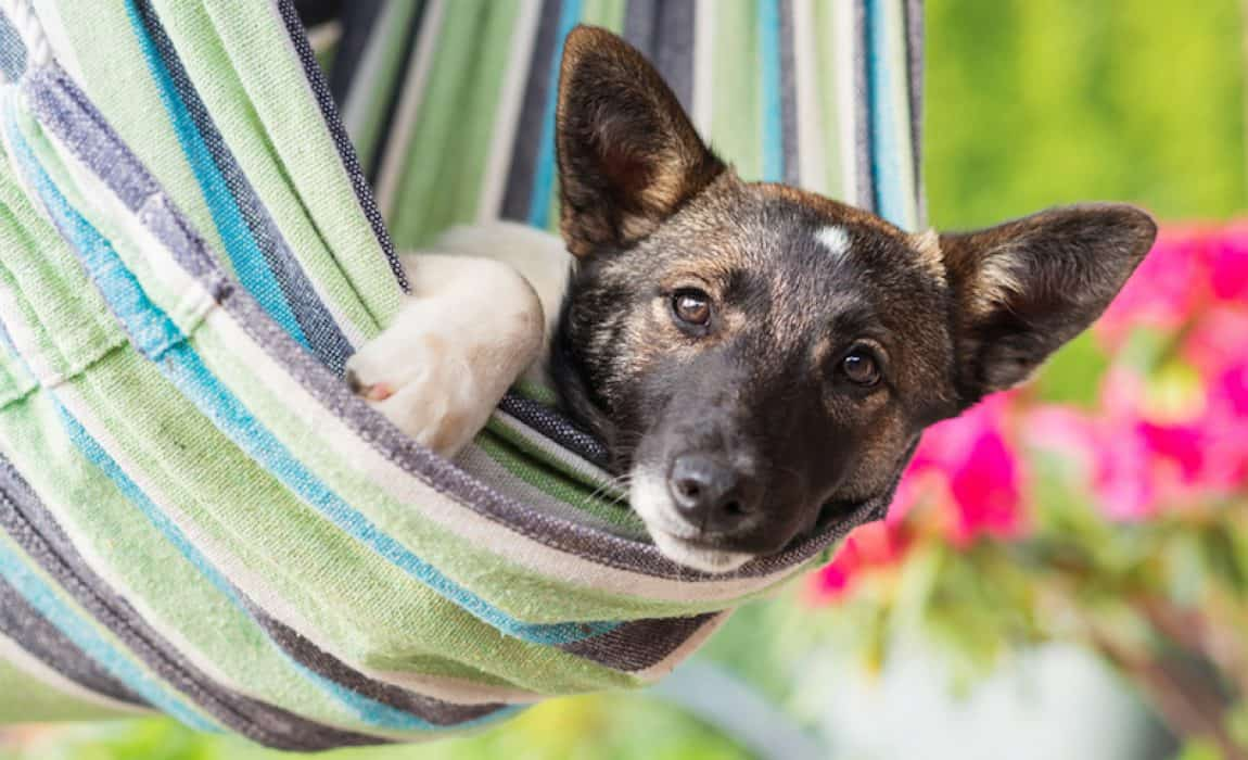 A Pet Crate Hammock Cover Protector is an Ideal Pet Accessory