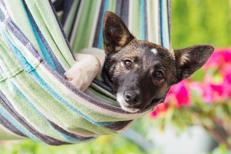 best dog hammocks