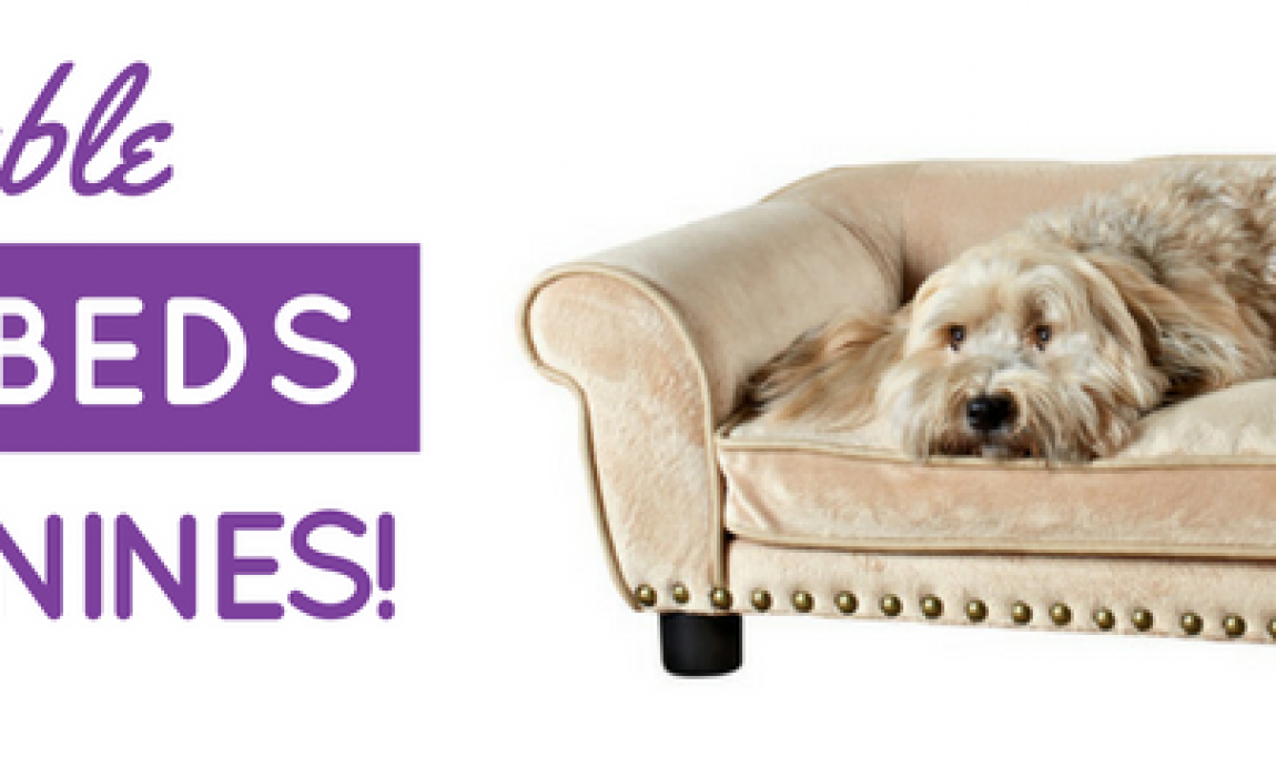7 Best Dog Sofa Beds 2019 Reviews Cushy Canine Couches