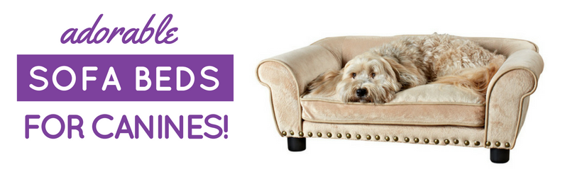best dog sofa beds