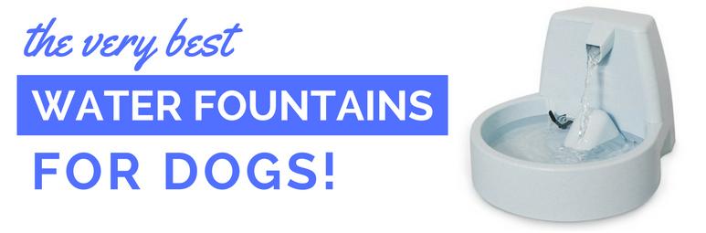 best dog water fountains