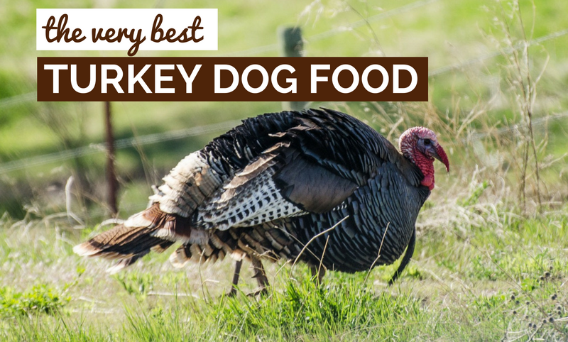 best turkey dog food