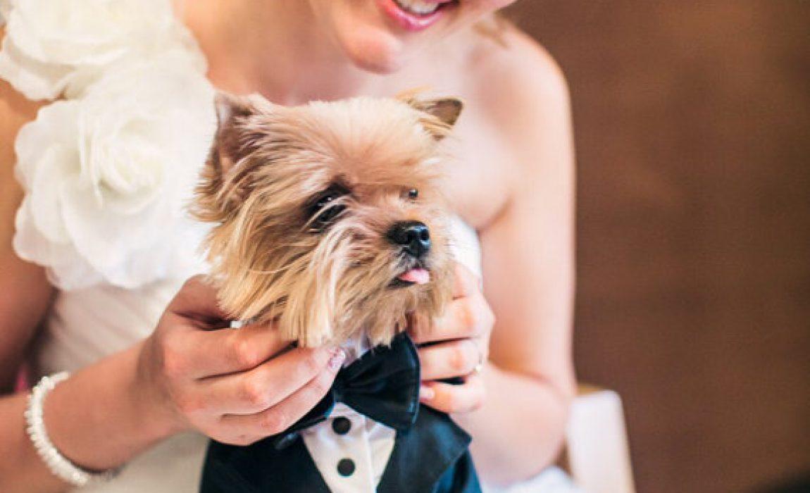 dog wedding clothes