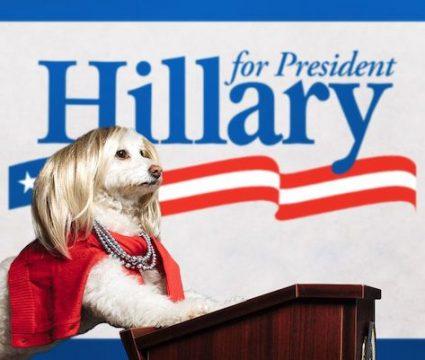 dog dressed as hillary clinton