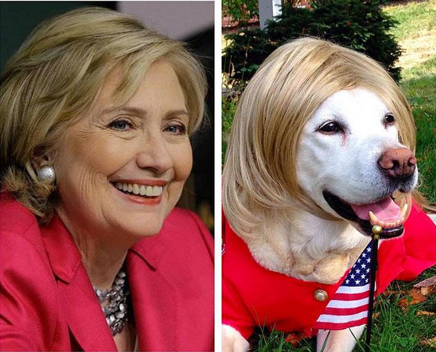 hillary clinton dog