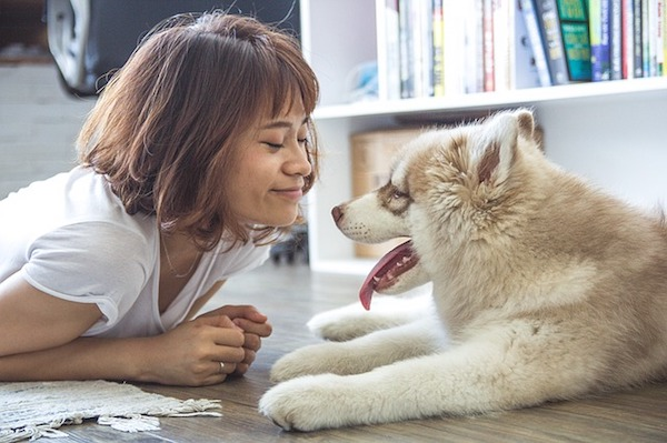Can You Give Dogs Over The Counter Pain Medicine