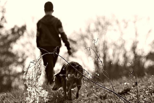 arthritic dog walks