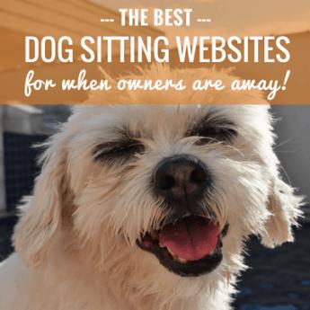 best dog sitting websites
