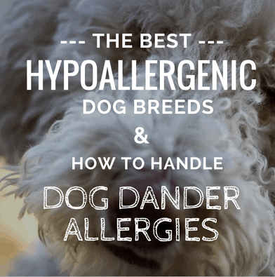 best dogs for allergies