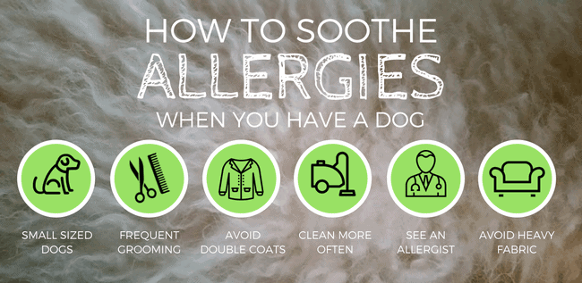 best hypoallergenic dogs for allergies