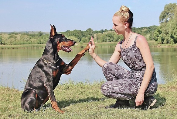 canine physical therapy arthritis