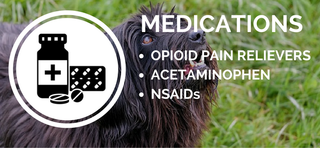 dog arthritis medications