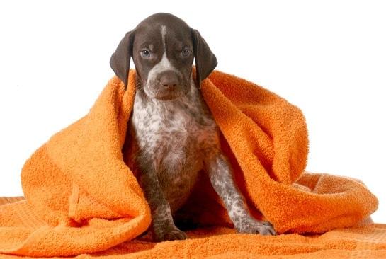 dog grooming towel dry