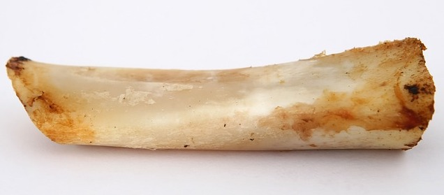 is it safe for dogs to eat bones
