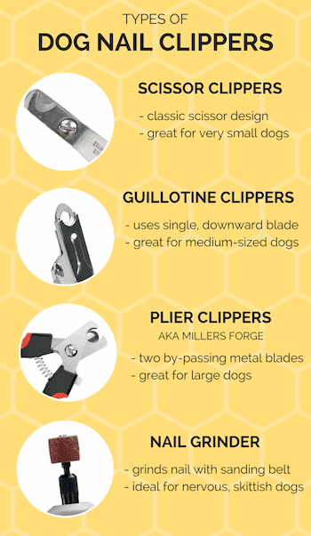 Best Dog Grooming Tools Amp Supplies Your Essential