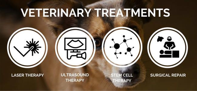 veterinary treatments for dog arthritis