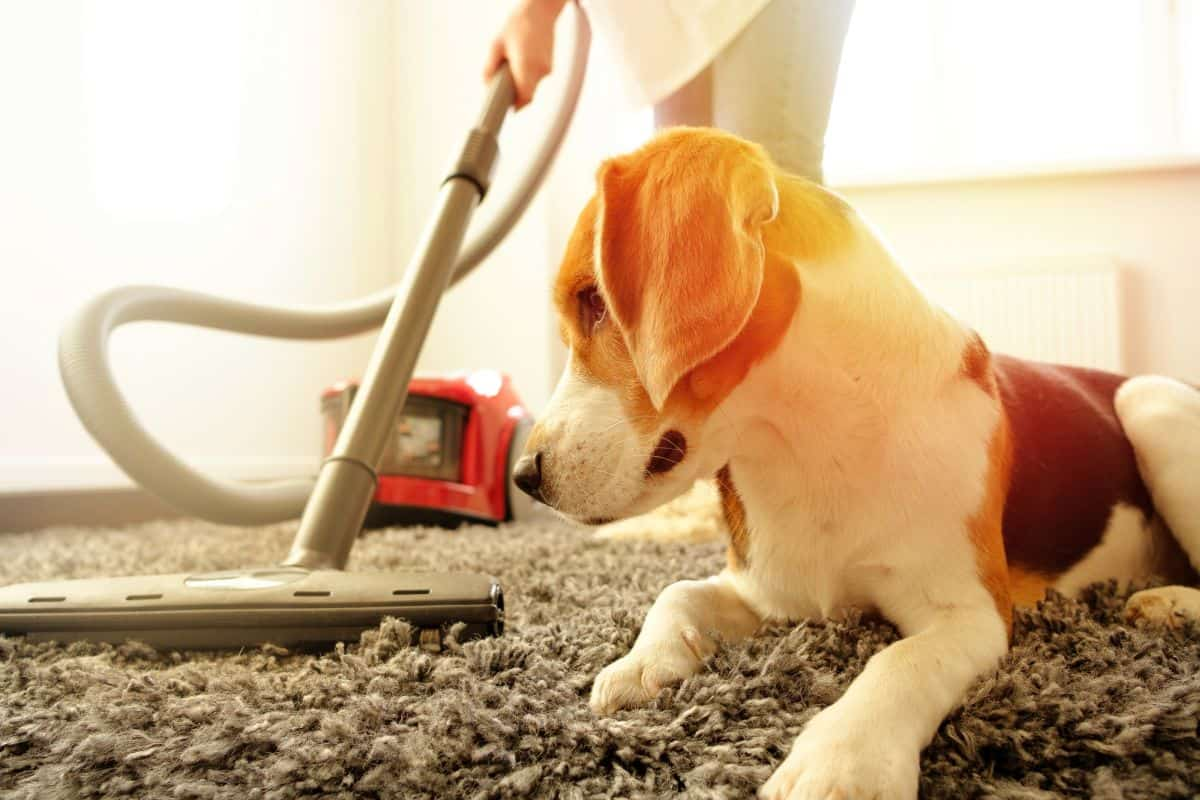 12 Best Vacuums For Dog Hair 2021 Reviews