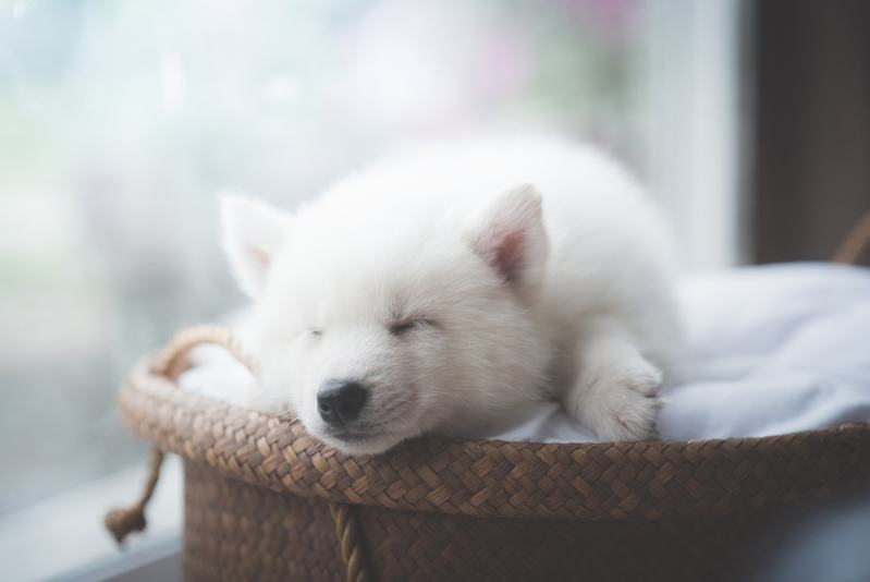 best dog beds for puppies