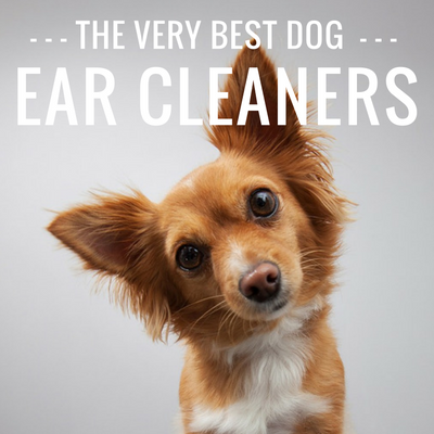 4 Best Dog Ear Cleaners [2019 Reviews]: From Liquid