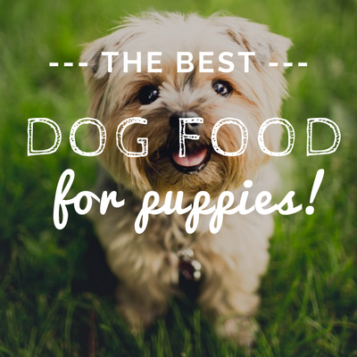 Best Food For Puppies >> 10 Best Dog Foods For Puppies 2020 Reviews Top Dry Wet