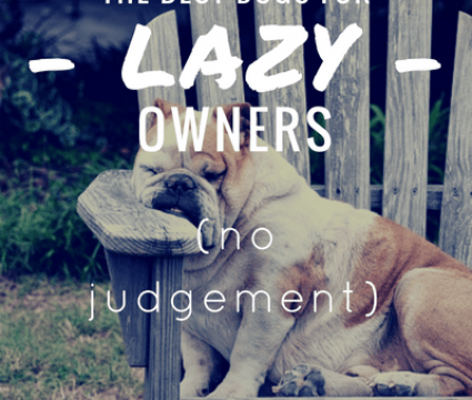 best dogs for lazy owners