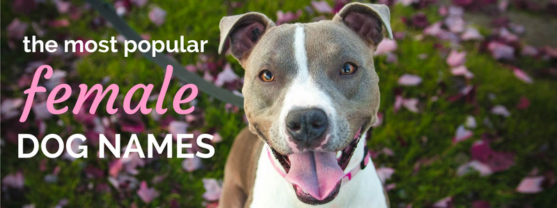 best female dog names