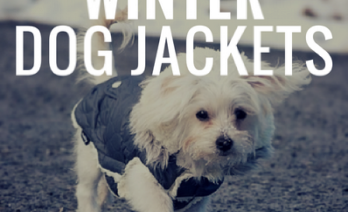 718b41c6770 12 Best Winter Dog Coats: Cozy Jackets To Keep Your Canine Warm!