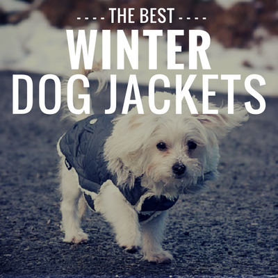 12 Best Winter Dog Coats Cozy Jackets To Keep Your Canine Warm