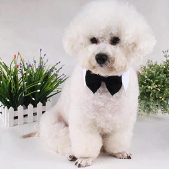 bowtie-dog-collar