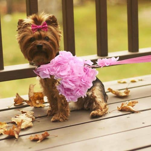floral dog harness
