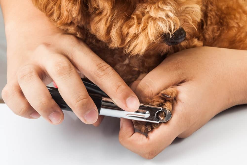 How to Use Guillotine Dog Nail Clippers: A Trimming Guide