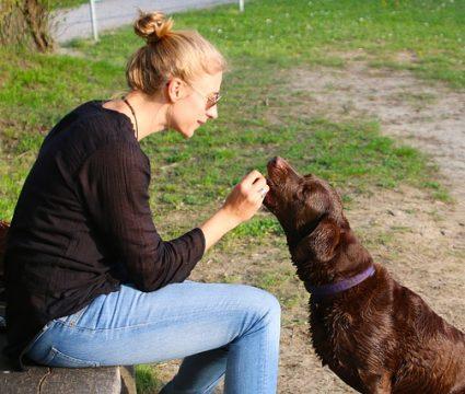 teach dog I love you