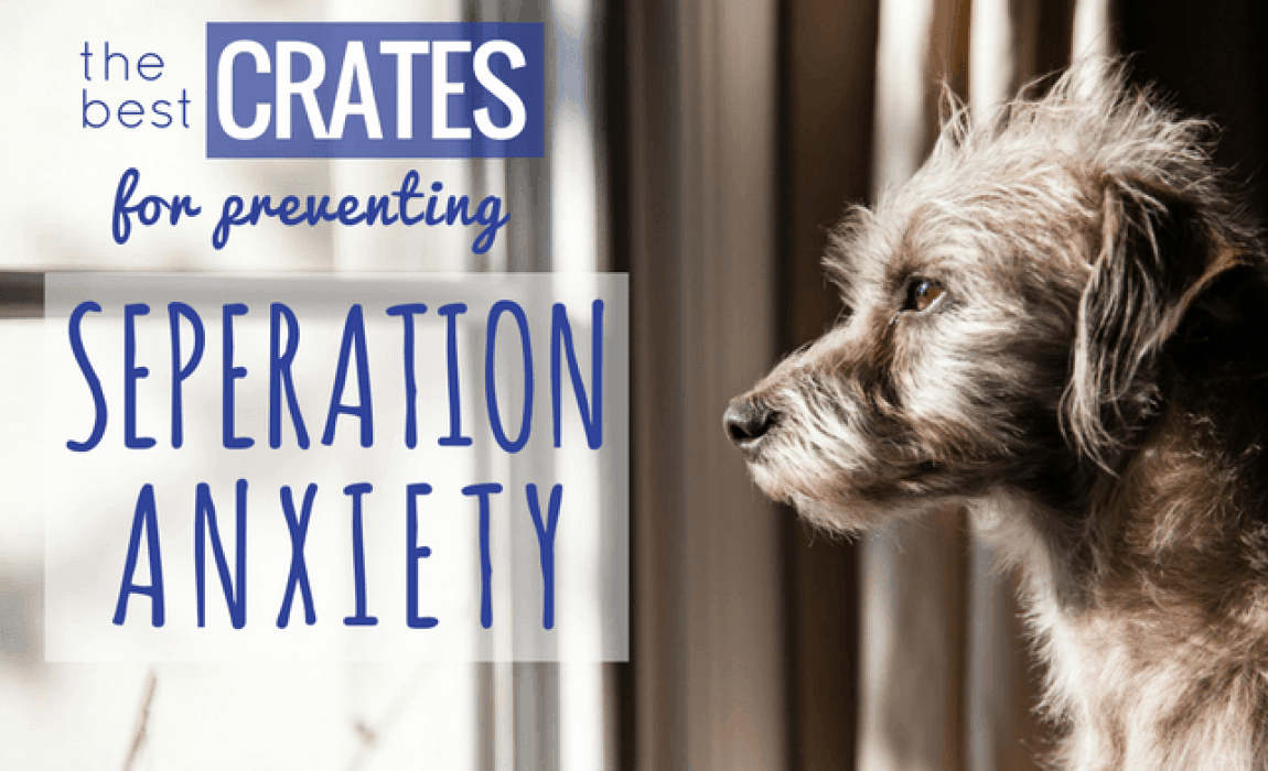 6 Best Dog Crates for Separation Anxiety [2019 Reviews]