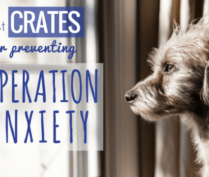 best crates for separation anxiety